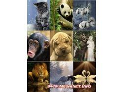 Движущиеся картинки животные  на телефон