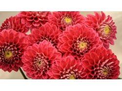 Фото цветы крупный план