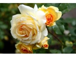 Фото цветы крупный план 3
