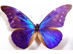 Бабочки фэнтези картинки 5