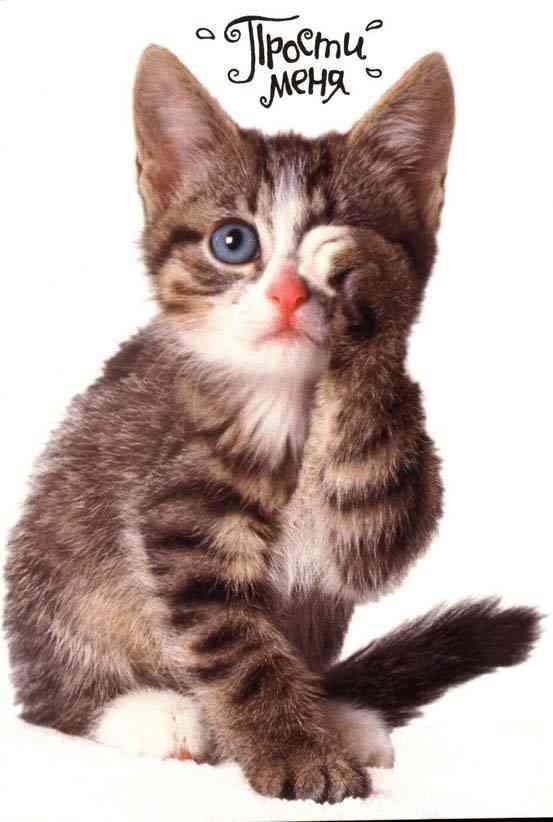 Картинка с котом надпись прости меня