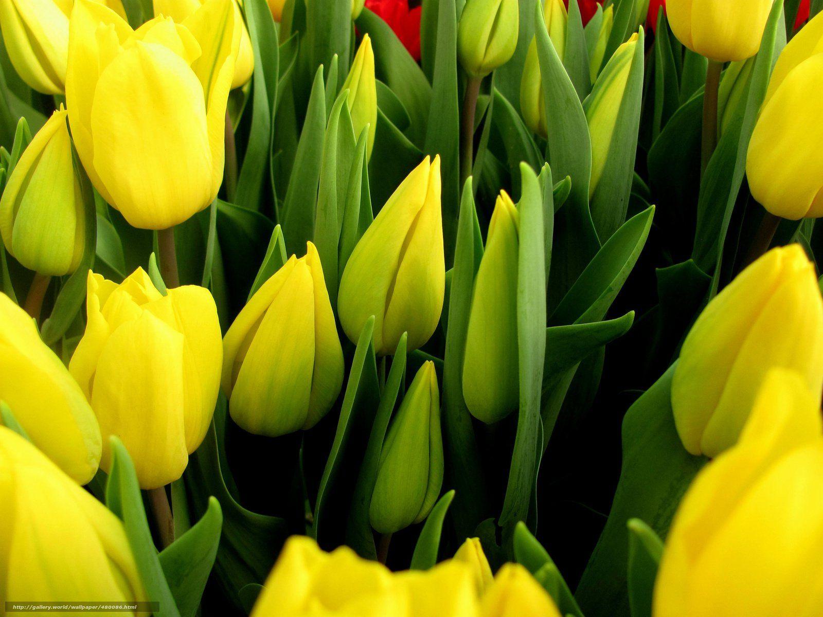 Скачать бесплатно Растения картинки на телефон Страница 1
