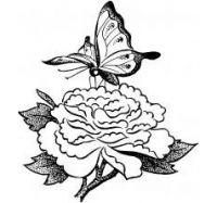 Картинки цветы с бабочками