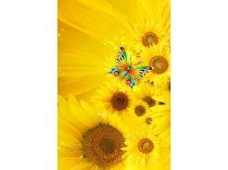 Картинки цветы с бабочками 2