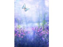Картинки цветы с бабочками 5