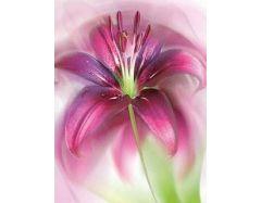 Картинки цветы с бабочками 6