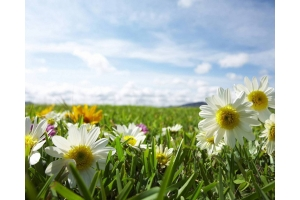 Лето лето лето скачать бесплатно