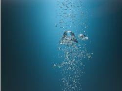 Обои для стола подводный мир 5