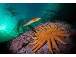 Tamper data подводный мир видео 3