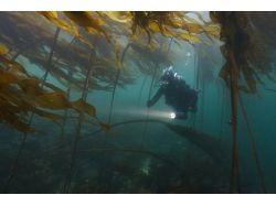 Tamper data подводный мир видео 5