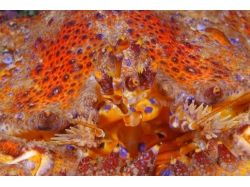 Tamper data подводный мир видео 6