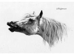 Игры картинки лошадки 4