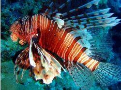 Мини сочинение подводный мир