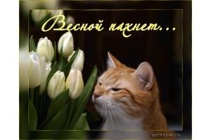 Красивые картинки весна