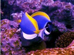 Подводный мир 2010