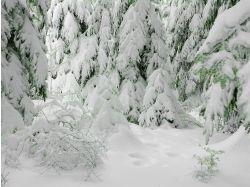 Картинки зима  в лесу