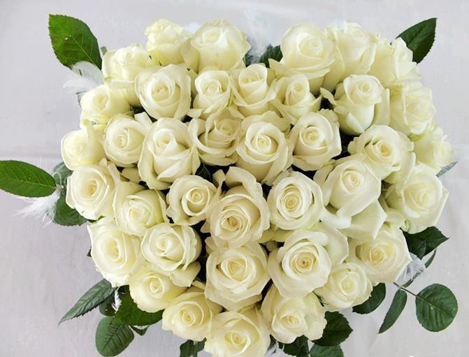 с днем рождения любимая картинки белые розы путин получит полное