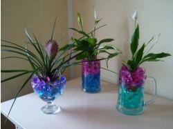 Картинки цветы в гидрогеле