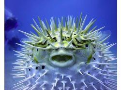 Ка изучали подводный мир