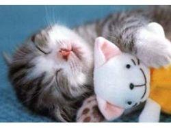 Все прикольные картинки маленьких котят
