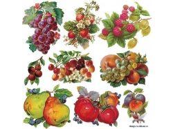 Клипарты свежие овощи фотошоп
