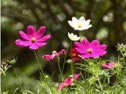 Картинки цветы хорошего качества
