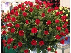 Картинки цветы розы скачать