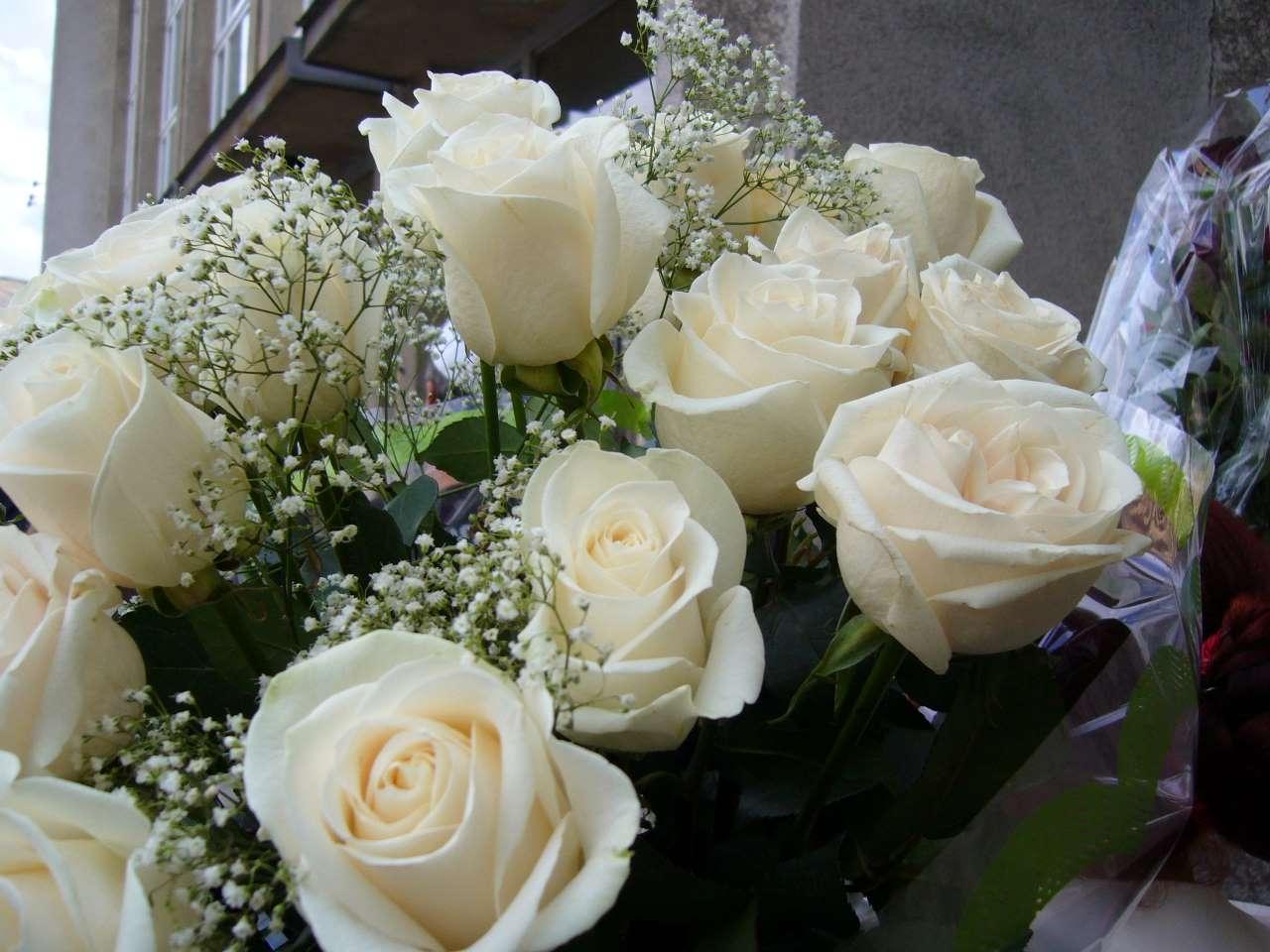 Картинки белые розы поздравления с