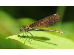 Биология 8 класс насекомые картинки