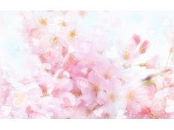 Нежные картинки цветы