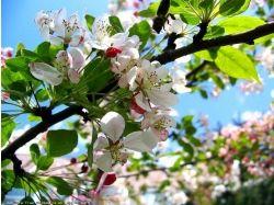 Картнки фото цветы