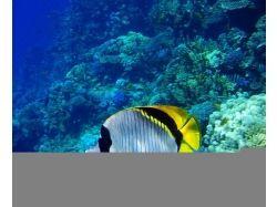 Красное море рыбки подводный мир фото