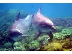 Плейкасты подводный мир