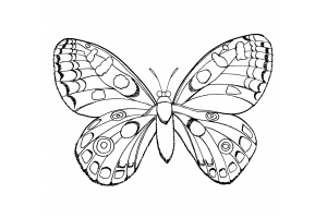 Бабочка рисунок