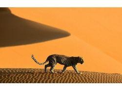 Картинки животные пустыни