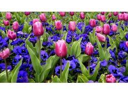 Фото цветы на рабочий стол