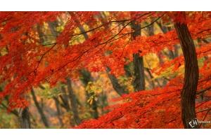 Осень осень скачать бесплатно