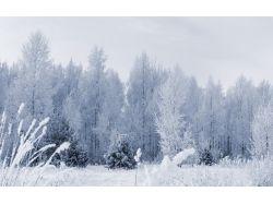 Картинки зима лес