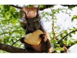 Картинки животные календаря смешные