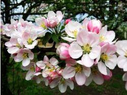 Природа картинки весна