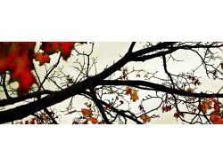 Осень фотографии высокого разрешения