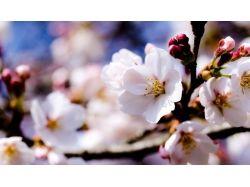 Картинки цветы  и деревья