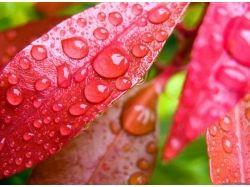 Осень фото дождь