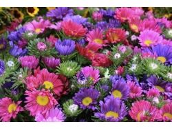 Фото цветы в ландшафте