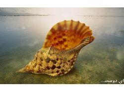 Картинки-подводный мир ракушки