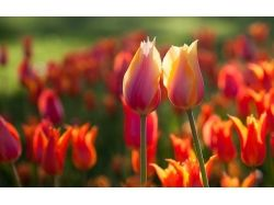 Супер фото цветы