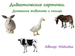 Дидактические картинки животные скачать
