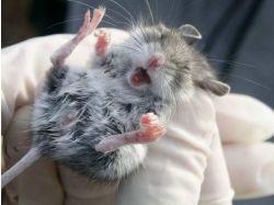 Мышка норушка прикольные картинки