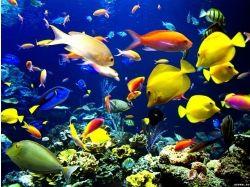 Подводный мир баг на деньги