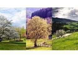 Тройные обои весна